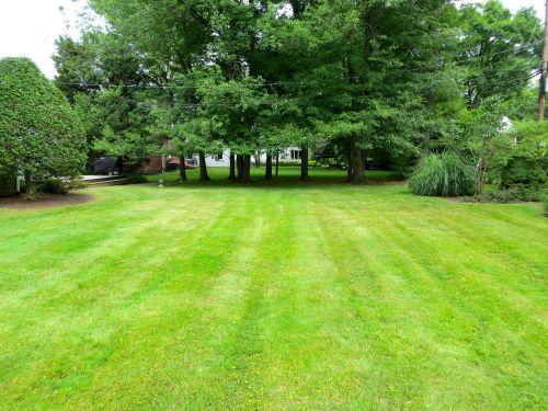 26 Backyard