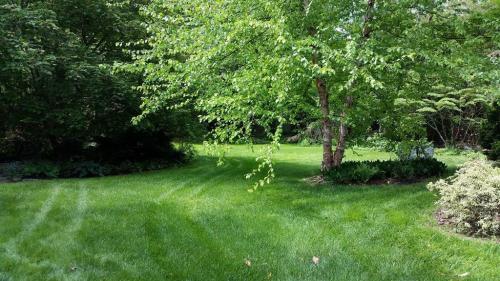 21 Backyard approach