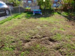 20 backyard