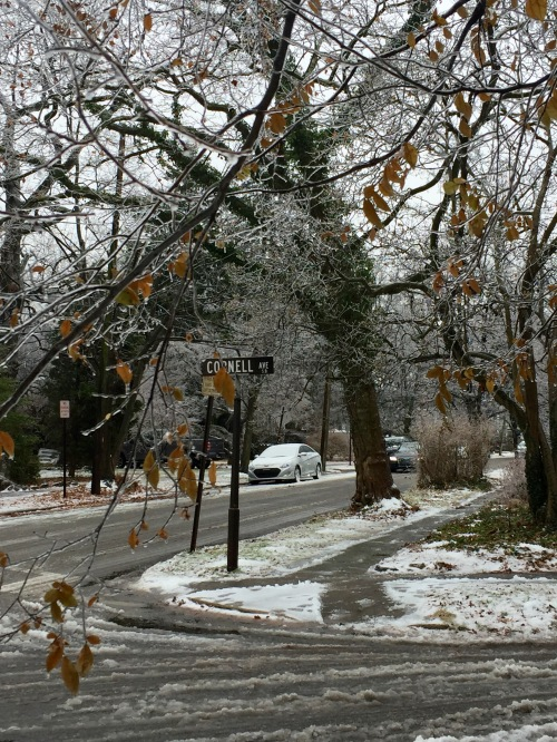 winter-cornell
