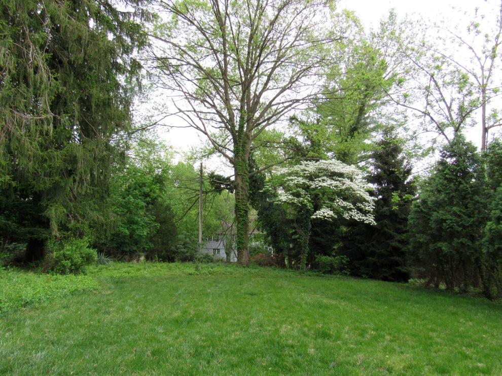 24 backyard
