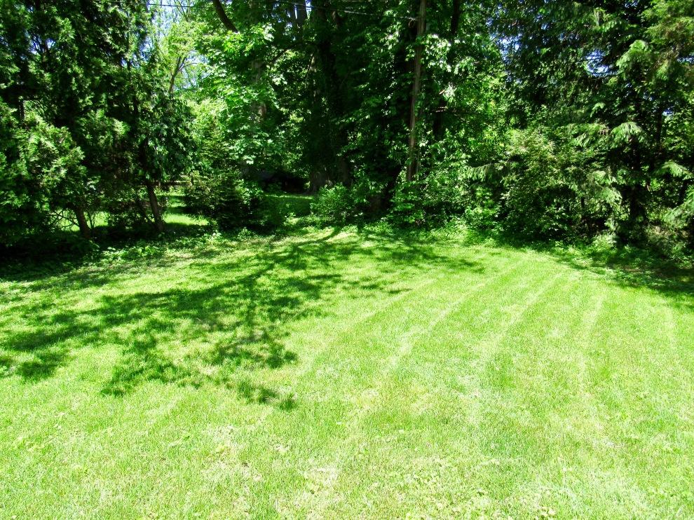 21 Backyard